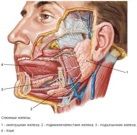 Сиалоаденит, воспаление слюнных желез